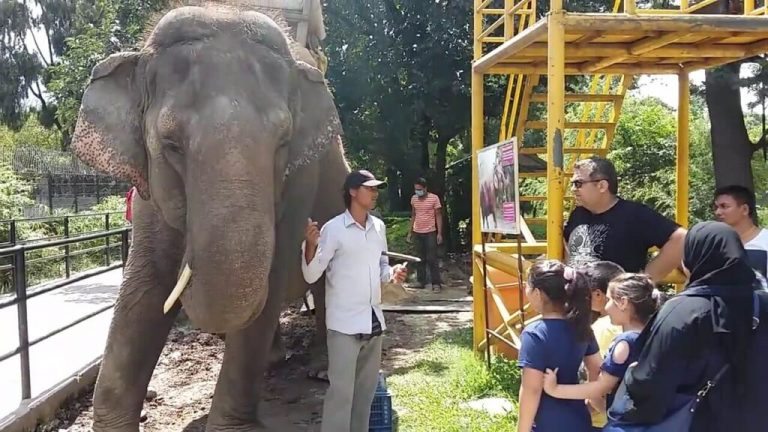 Nepal Central Zoo Opened for Visitors After Nine-Month Hiatus