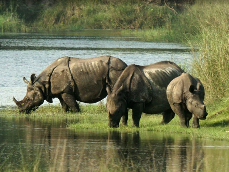 Nepal rhino numbers rise in 'exciting' milestone